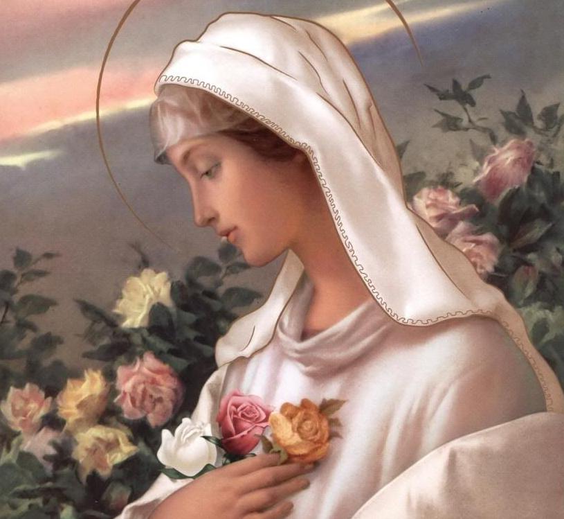 Rosa Mystica - Photo Credit Vatican.org